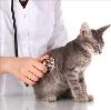 Ветеринарные клиники в Заозерном